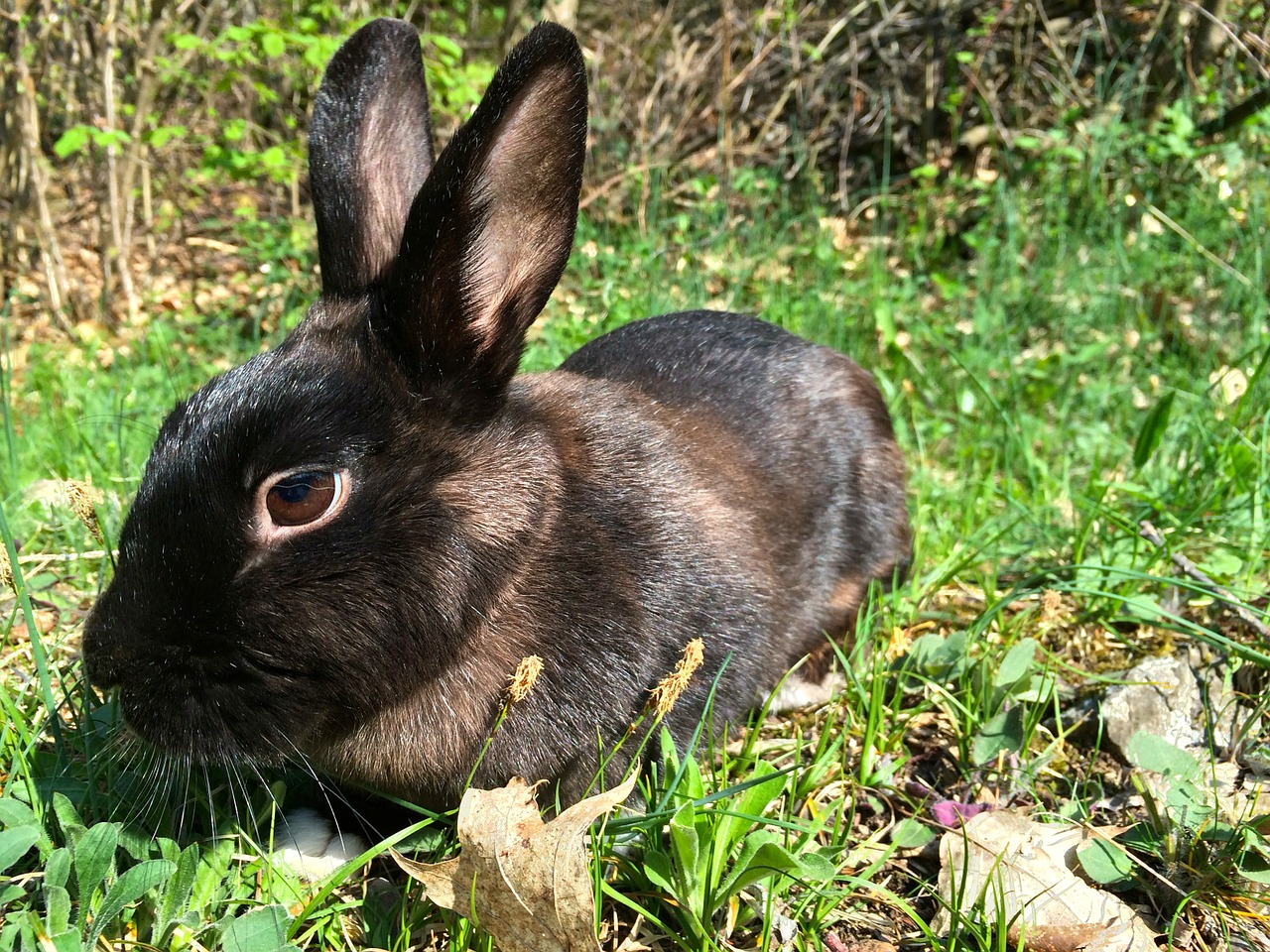 30 Interesting Facts About Rabbits