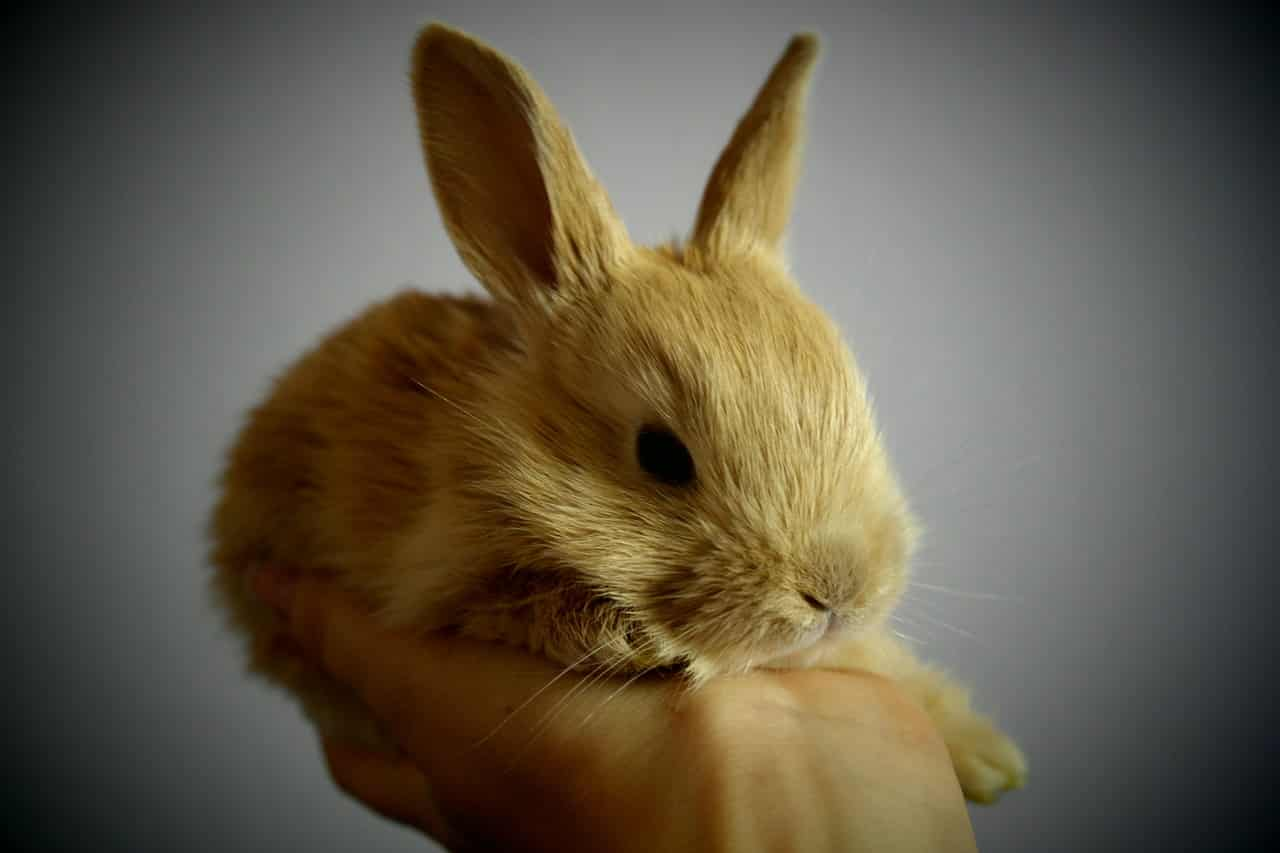 Are Rabbits Right for You