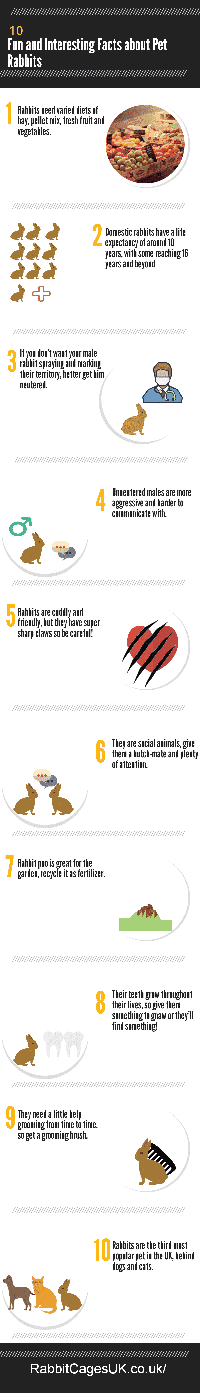 10 Fun and Interesting Facts about Pet Rabbits Infographic