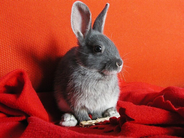 cute rabbits for fostering