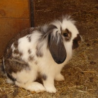 fostering rabbits explained what you need to know