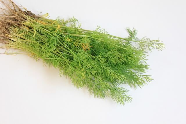 Can Rabbits Eat Dill