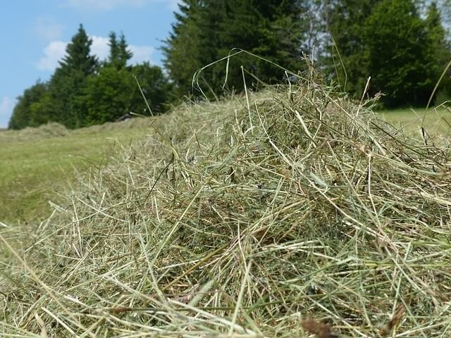 What to Look for in Quality Hay for Your Rabbit