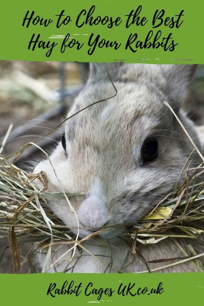 best hay for rabbits how to choose the best grass food